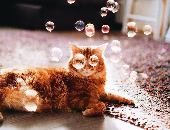 I Photograph The Adventures Of My Ginger Cat – Cutlet