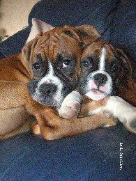 doggy-cuddle-5bb5333c6c6a5.jpg