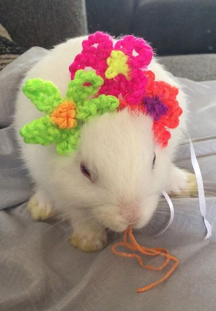 Bunny Born With No Ears Gets The Most Adorable Crocheted Sets From The Owner