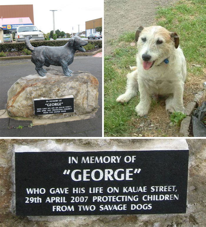George The Jack Russell Saved 5 Children From Being Attacked By Two Pitbulls In New Zealand