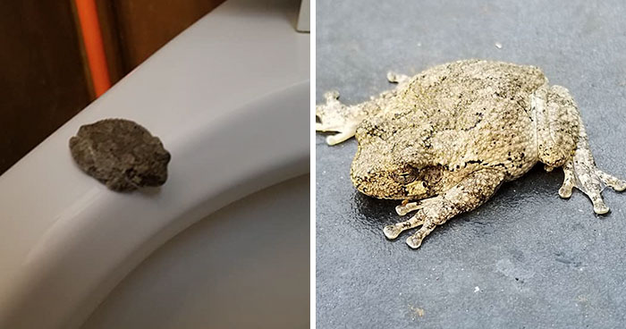 Man Blames 'The Plumbing' After Finding A 'Frog' On A Toilet Seat, Then His Wife Tells What Really Happened