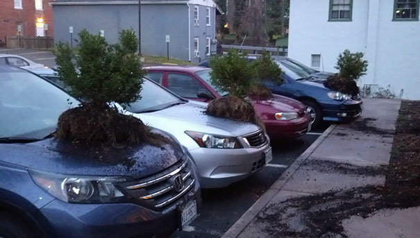 Can You Imagine Yourself Being This Bored That You Would Start Putting Random Plants On Random Cars? Well, Me Neither