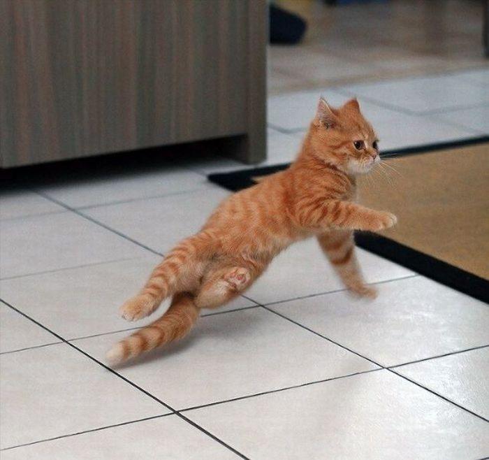 Funny-Dancing-Cats