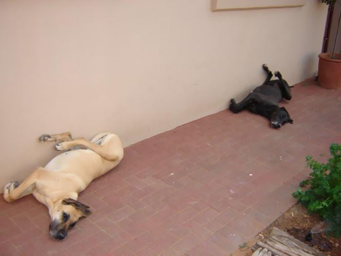Así les gusta dormir