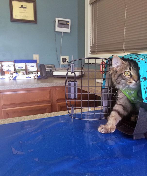 Dexter's Vet Visit As A Kitten
