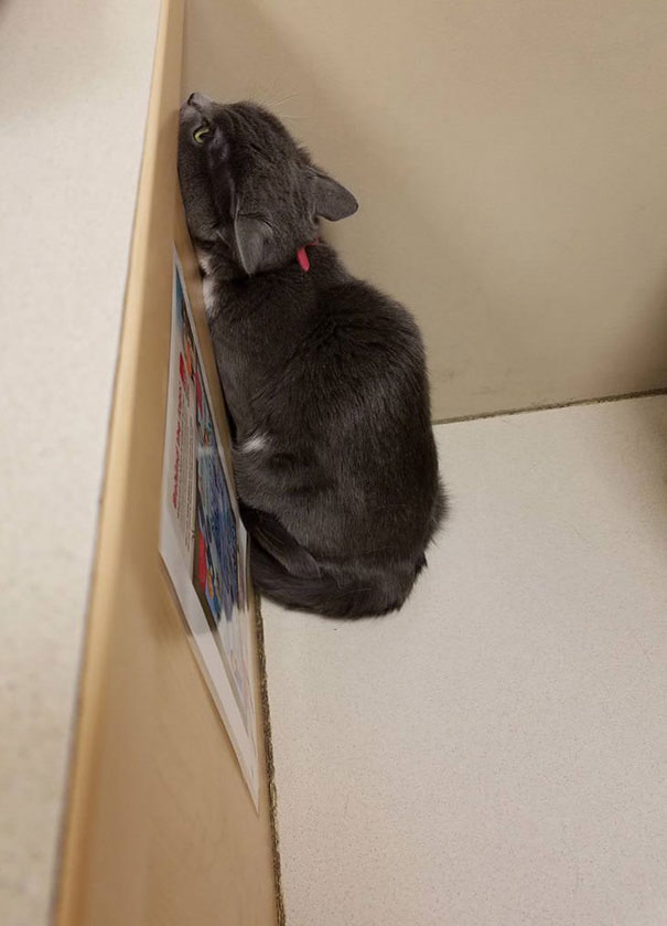 Mouse Is Terrified Of The Vet. She's Trying To Hide From Her In The Corner