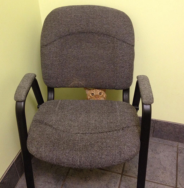 """""""They're Gonna Stick What Where?!"""" My Cat At The Vet's Office"""