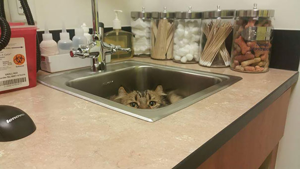 The Vet Thought We Came In Without Her