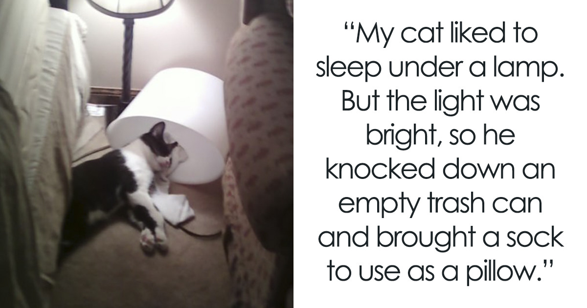 28+ Of The Most Unbelievably Smart Things Animals Have Done That Surprised People