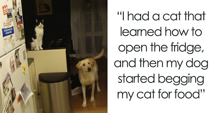 118 Of The Most Unbelievably Smart Things Animals Have Done That Surprised People