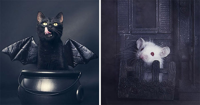 I Photograph Animals Every Halloween