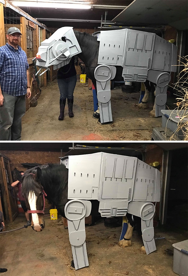 Me (Fat Guy In Blue) With My Albatross. The 5 Month Obsession Of Using EVA Foam And PVC Pipe To Dress A 17 Hand High, 2000 Pound Horse As An AT-AT