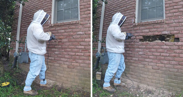 Bee Remover Posts What He Found After Removing The Bricks From A Client's Home, And His Photos Go Viral