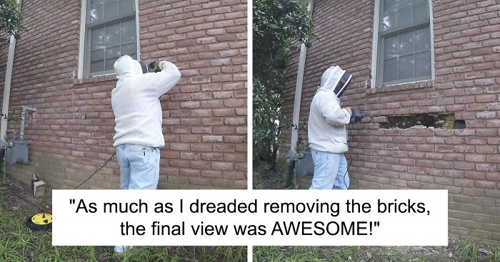 Bee Remover Posts What He Found After Removing The Bricks