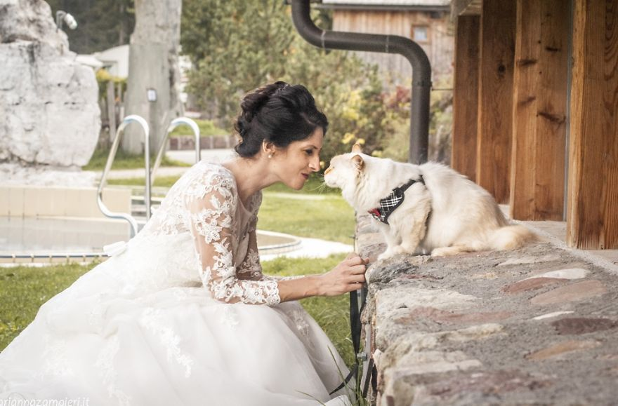 I Am A Photographer Who Does Post-Wedding Shootings With Cats (Part 2)