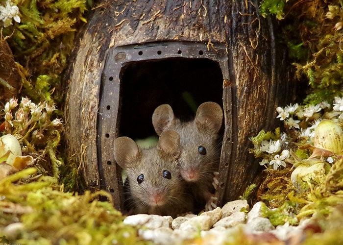 Este hombre descubrió una familia de ratones viviendo en su jardín y les construyó una aldea en miniatura