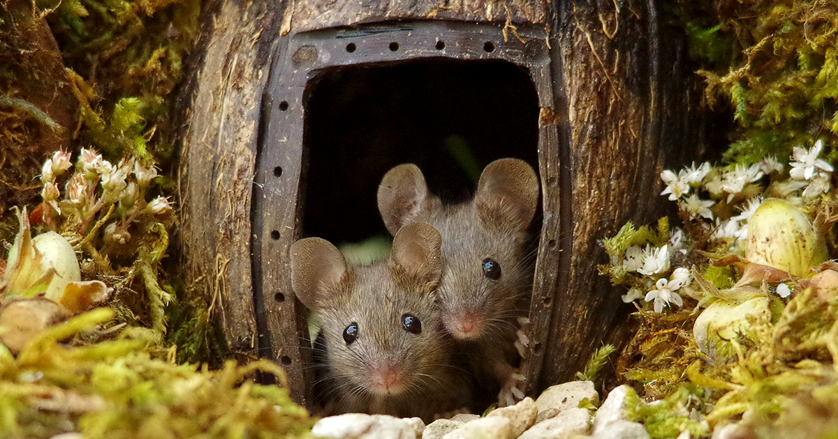 Photographer Discovers A Family Of Mice In His Garden, Builds Them The Cutest Village Ever