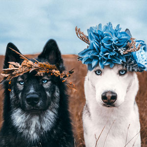 Photographer Takes Dreamy Portraits That Display The Unbreakable Bond Of Her Dogs