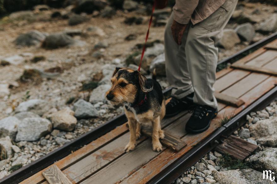 Doggo In Mountains!