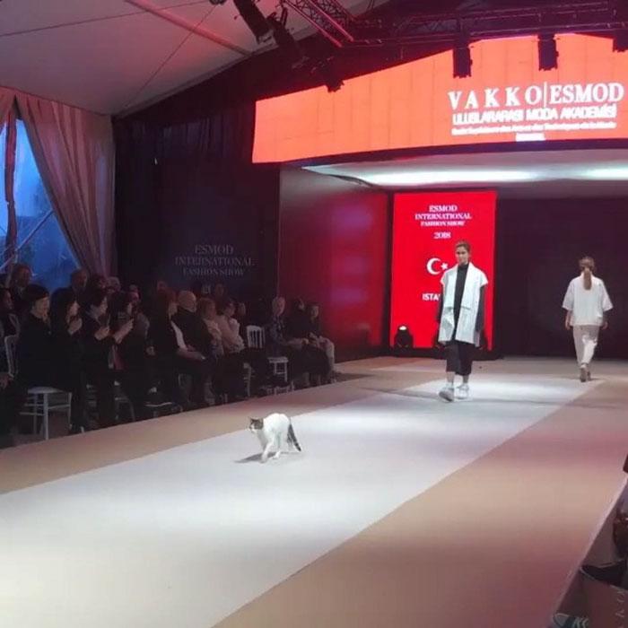 81c7868c5f Recently the Esmod International Fashion Show