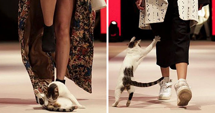 Katze crasht Fashion Show und verteidigt den Catwalk