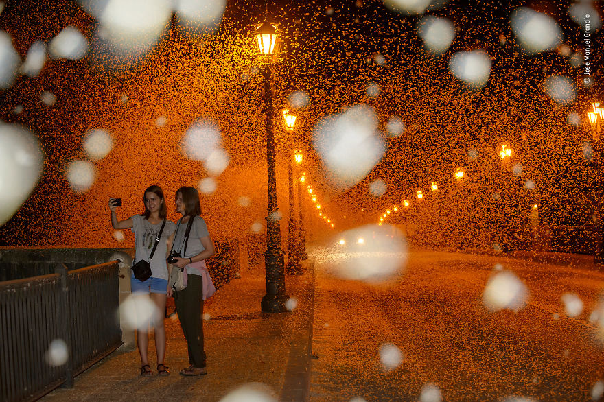 """Misguided Mayflies"" By Jose Manuel Grandío, Spain, Highly Commended 2018 Urban Wildlife"