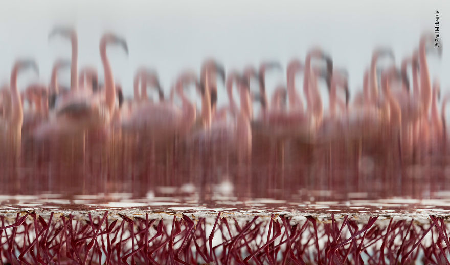 """The Upside-Down Flamingos"" By Paul Mckenzie, Ireland / Hong Kong, Highly Commended 2018 Creative Visions"