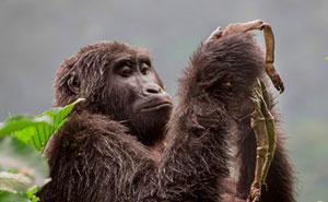 10+ De las mejores fotos de fauna de 2018 (AVISO: Algunas imágenes pueden ser muy brutales)