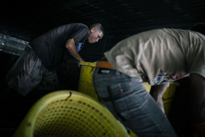 A Burmese Migrant That Works Illegally In A Fish Processing Factory Is Helping Unload The Previous Night's Catch