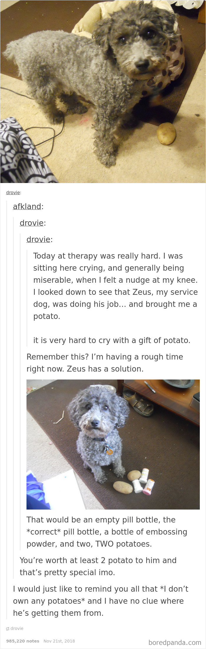 How To Service Dog
