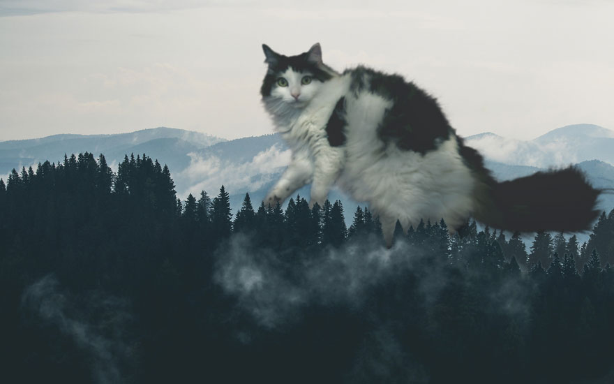 Cats-Photoshop-Funny-Cakes1todough1