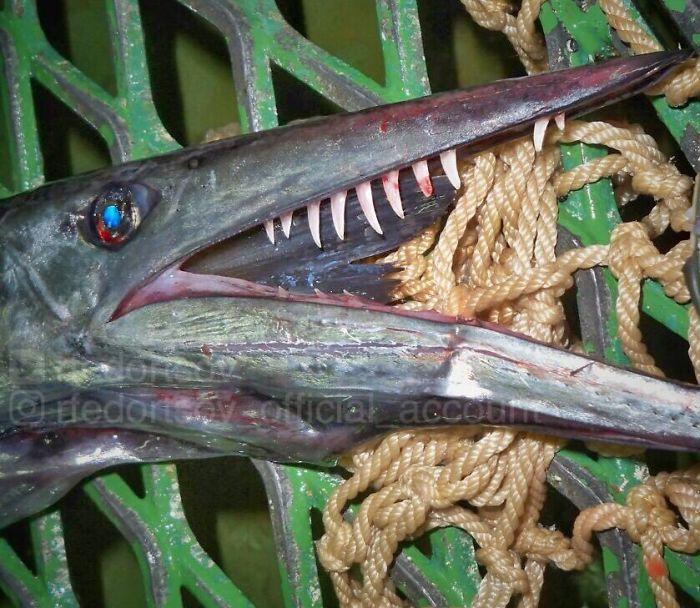 """""""Lancetfish. Teeth Like Little Swords"""""""