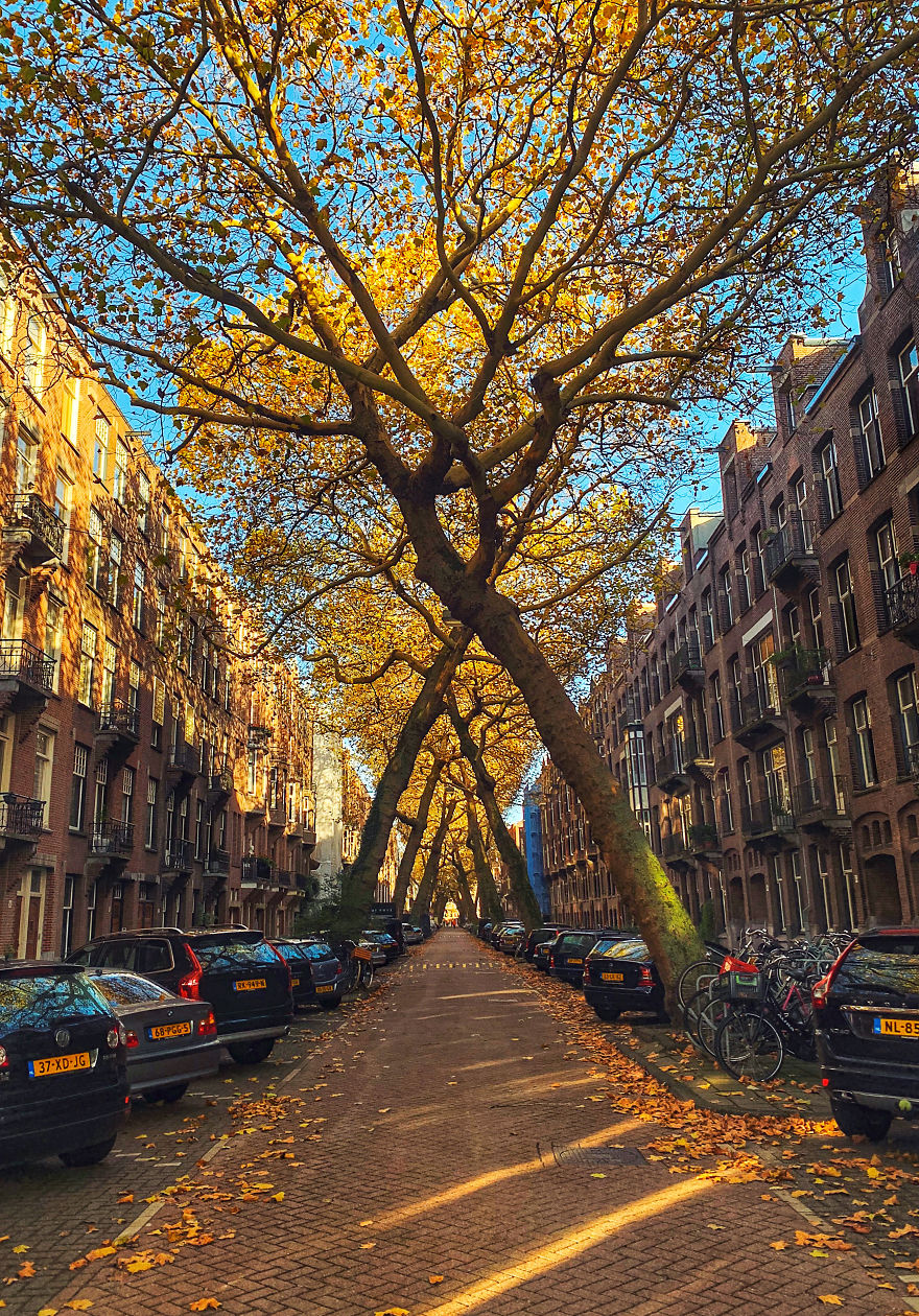 Осень в Амстердаме.