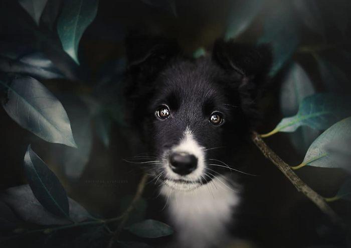 50 Of The Best Dog Photos I've Ever Taken
