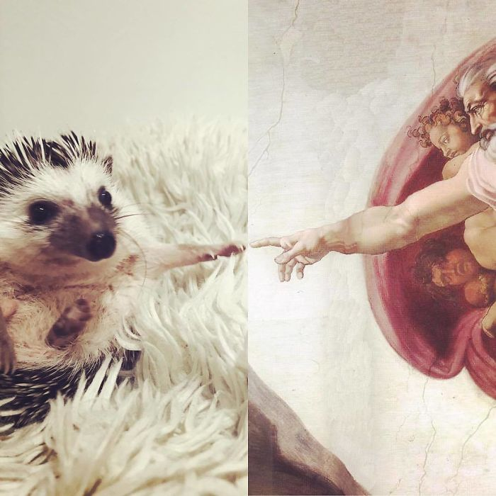 The Creation Of Hedgehog