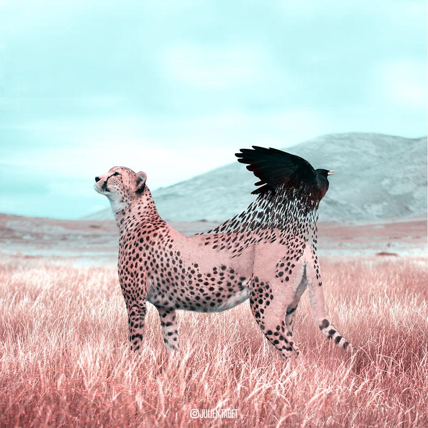 Reborn Cheetah