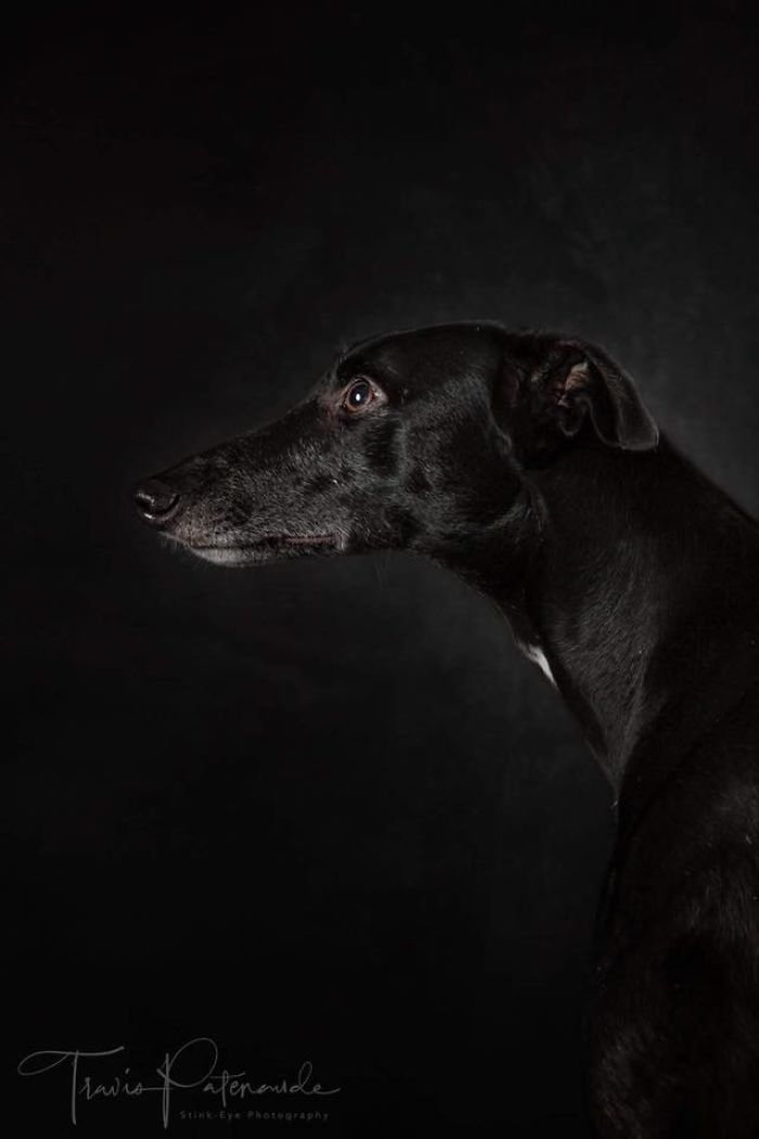 I Am A Voice For The Hunting Dogs Of Spain