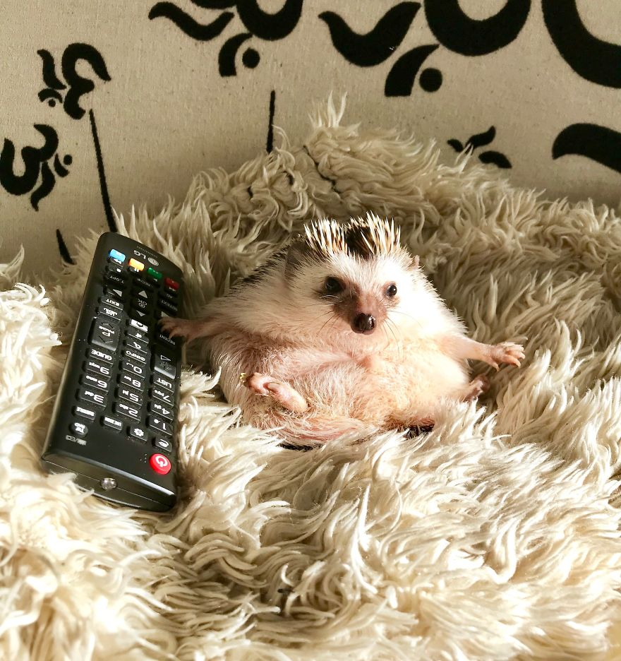 Don't Turn Off The TV! I'm Watching It!