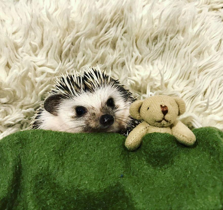 Teeny Tiny Teddy