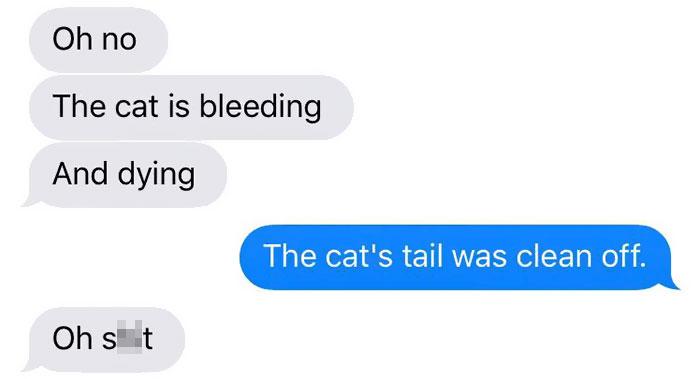 cat-dog-tail-retailer-walmart-story-8
