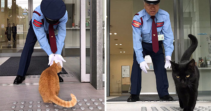 Two Cats In Japan Have Been Trying To Sneak Into A Museum For Years (30 Pics)