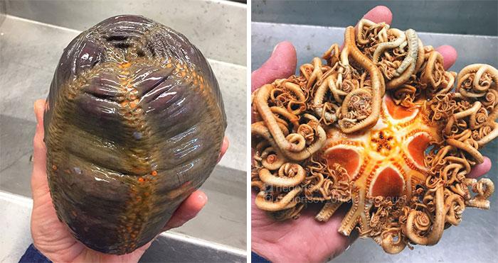 Este pescador ruso comparte las terroríficas criaturas del fondo del mar que encuentra, y queremos que pare