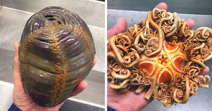 Russischer Fischer postet schreckliche Kreaturen der Tiefsee und sie sind unheimlich