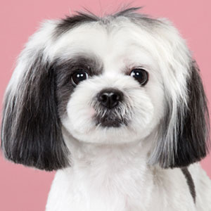 7 Dogs Before And After Japanese Grooming (New Pics)