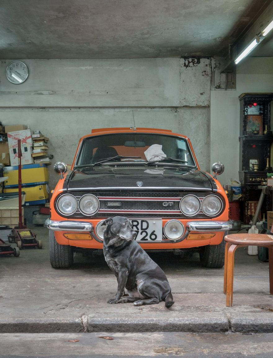 Photographer Does A Brilliant Project On The Dogs Guarding The Auto Thieves Workshops In Hong Kong