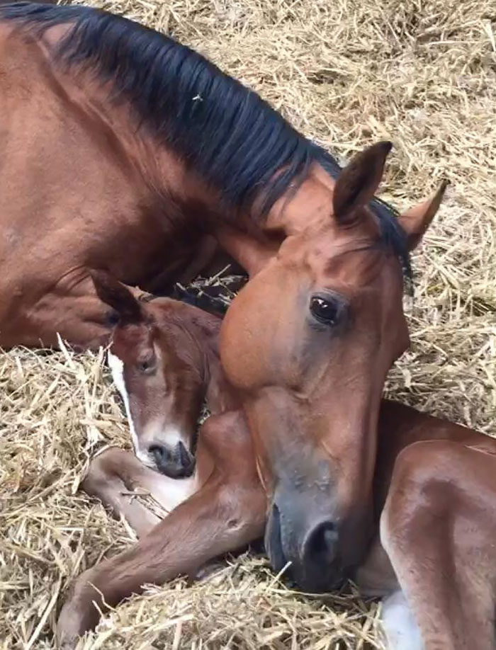 This Mare Lost Her Foal And Then, Two Days Later, This Foal Lost Its Mother. Here They Are An Hour After Meeting