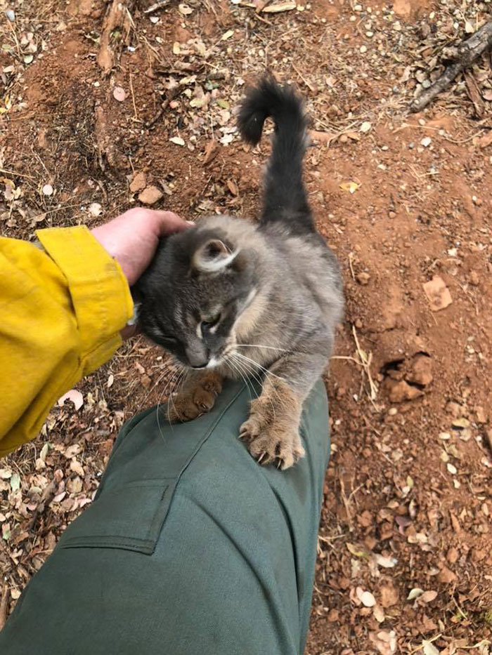 cat coleman
