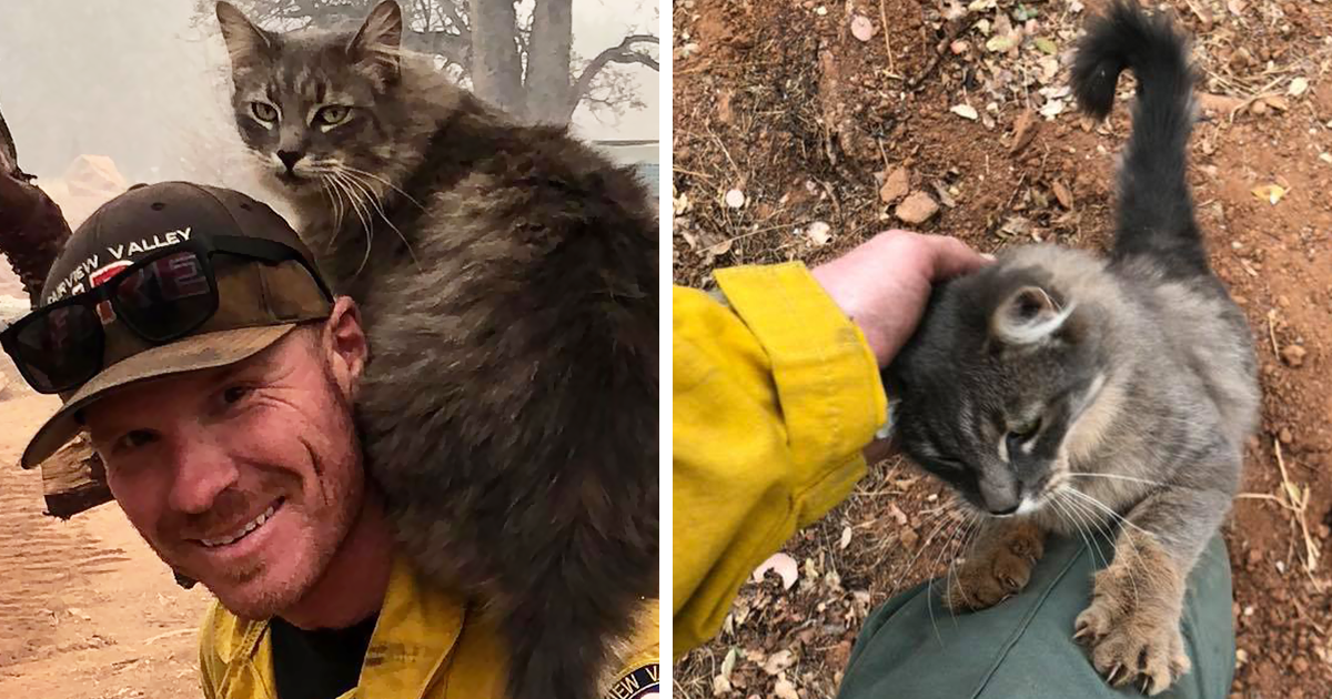 cat firefighter saves california wildfire paradise coleman fireman ryan rescued coverimage fires pets mybestfriend gr κοινοποίηση