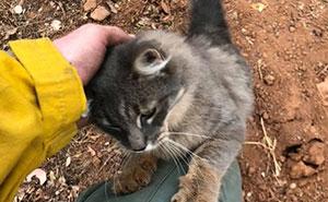 Feuerwehrmann rettet Katze vor Waldbränden in Kalifornien und sie kann nicht aufhören ihm zu danken