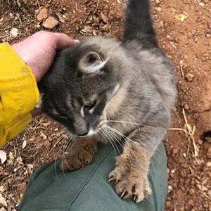 Este bombero salvó a una gata en los incendios de California, y ahora ella no para de agradecérselo